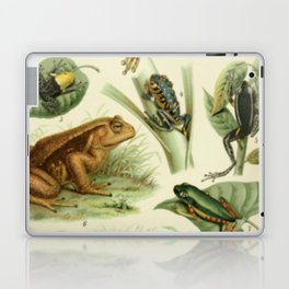 Frogs And Toads Laptop & iPad Skin