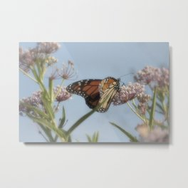 Monarch Butterfly XVII Metal Print