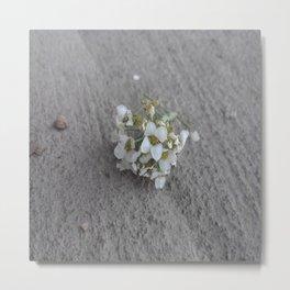 Petty in white. Metal Print