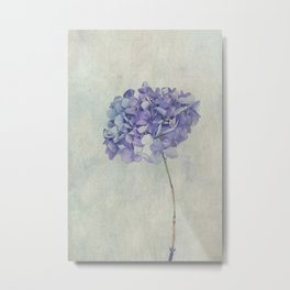 Beautiful Blue Hydrangea Metal Print