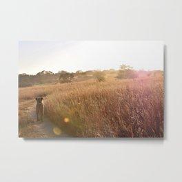 Sunrise Lion Walk Metal Print