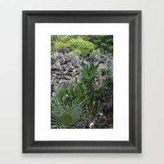 Cayman Catus Framed Art Print