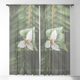 Trillium Flowers Pacific Northwest - Nature Photography Sheer Curtain