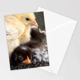 Five Young Chicks Stationery Cards