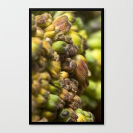 SPROUT #2 Canvas Print