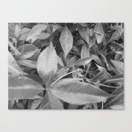Leave Cluster Canvas Print
