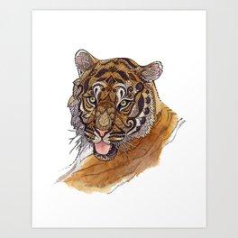 Immature Tiger Art Print