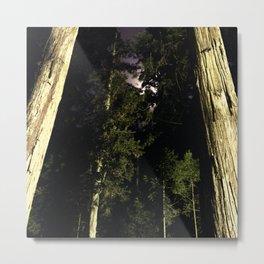 Moon light trees in Okunoin cemetery of Koyasan, Japan Metal Print