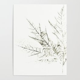Maple Leaf Silhouette On  White Background Poster