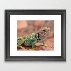 Eastern Collard Lizard Framed Art Print