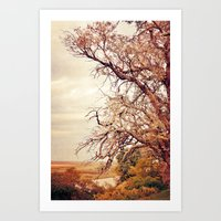 Old branches Art Print