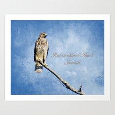 Red-shouldered Hawk, Juvenile Art Print