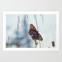 Mountain Butterfly Art Print