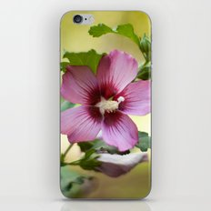 Hardy Hibiscus iPhone & iPod Skin
