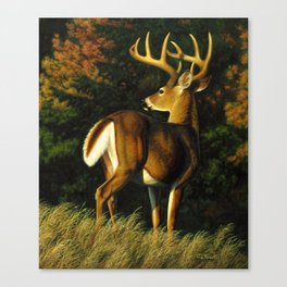 Whitetail Deer Trophy Buck Canvas Print