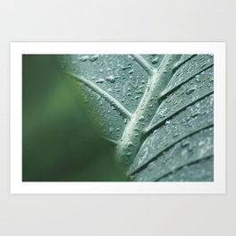 Leaf still life, fine art, high quality, macro photography, nature photo Art Print