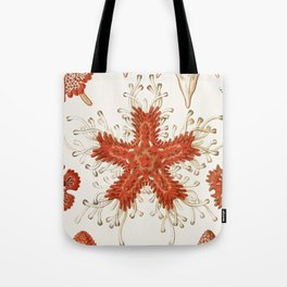 Starfish Vintage Illustration Tote Bag