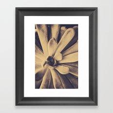 Succulent Leaves Framed Art Print