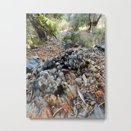 Spar Metal Print