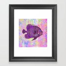 Fish W Framed Art Print