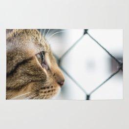 Cat Tax Rug