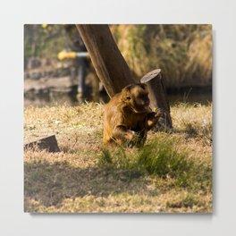 Monkey Business II Metal Print