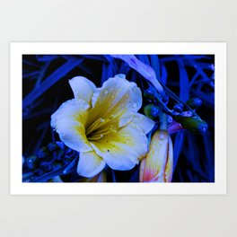 Altered Flower Image Art Print