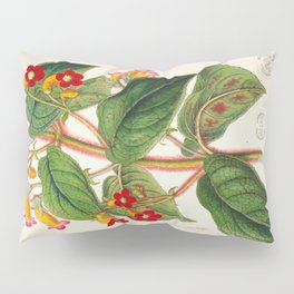 Lydia Warscewiczii Vintage Botanical Floral Flower Plant Scientific Illustration Pillow Sham