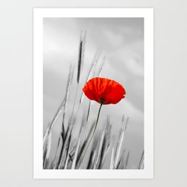 Poppy Red 070 Art Print