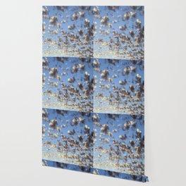 Summer Sunrise Clouds Wallpaper
