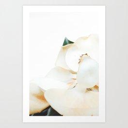 Botanical Magnolia in Color 2 Art Print