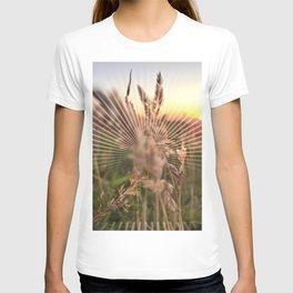 Peel sunset lll - sunset graphic T-shirt