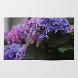 Big Hortensia flowers in front of a window Rug