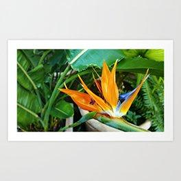 Orange tropics Art Print