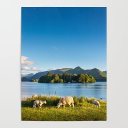Sheep grazing on the lush shores of Lake Derwentwater, England Poster