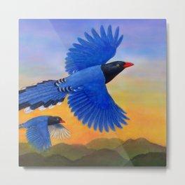Taiwan Blue Magpie(1) Metal Print