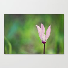 Pink Cyclamen Canvas Print