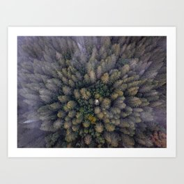 Above the Pines Art Print