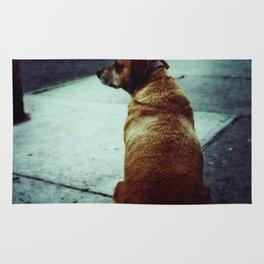 Doggie waits Rug
