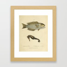 Fish and sea horse by Sarah Stone, 1790 Framed Art Print