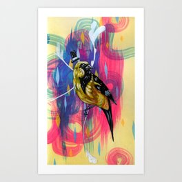 This is the dapper oriole you've been looking for Art Print