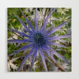 A thistle with style Wood Wall Art