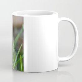 Crocus Pocus Coffee Mug