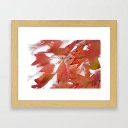 Anthocyanin of Autumn II Framed Art Print