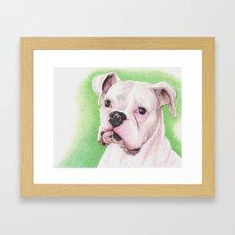 The White Boxer Framed Art Print