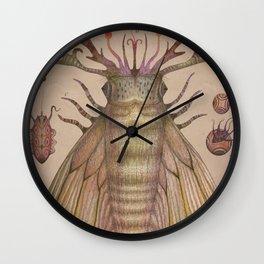 Cephalopodoptera Tab. IV Wall Clock