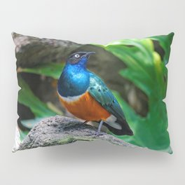 A Stunning African Superb Starling Pillow Sham