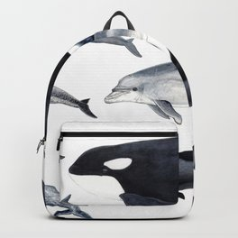 Delphinidae: Dolphin family Backpack