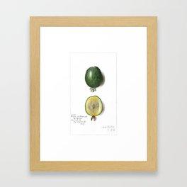 Lime - Fruit Illustration Framed Art Print