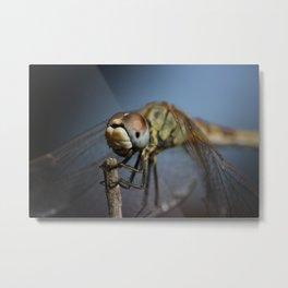 Dragonfly - Macro Metal Print